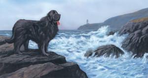 D is for Dog (Newfoundland Dog)